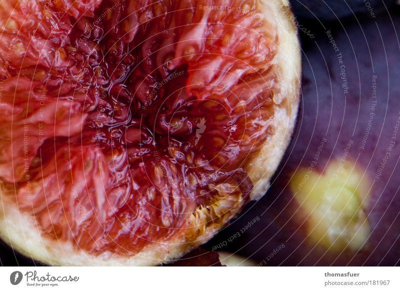 Red Colour Nutrition Food Contentment Fruit Glittering Natural Fresh Esthetic Sweet Round Joie de vivre (Vitality) Delicious Organic produce Exotic