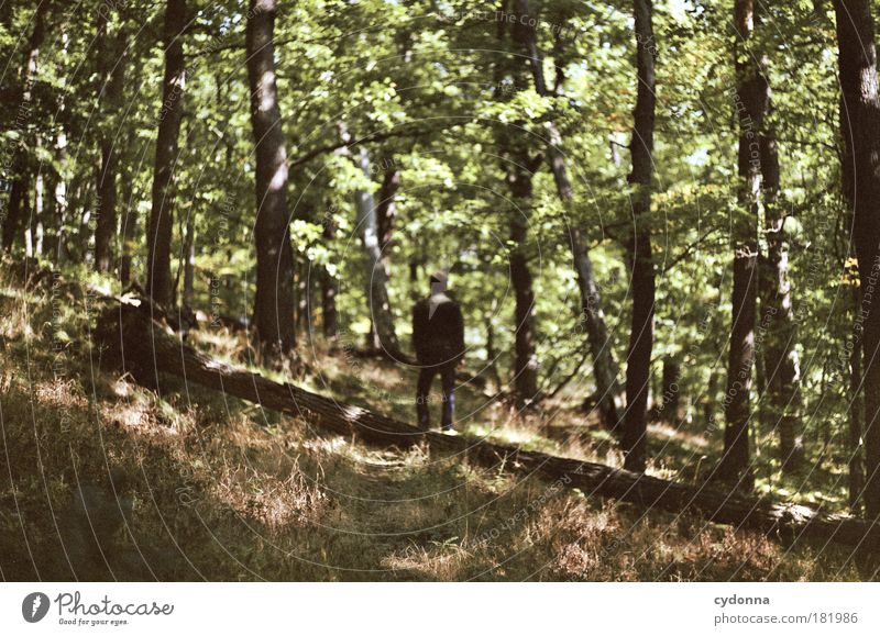 Human being Nature Man Beautiful Tree Landscape Calm Forest Adults Environment Life Sadness Lanes & trails Time Freedom Dream