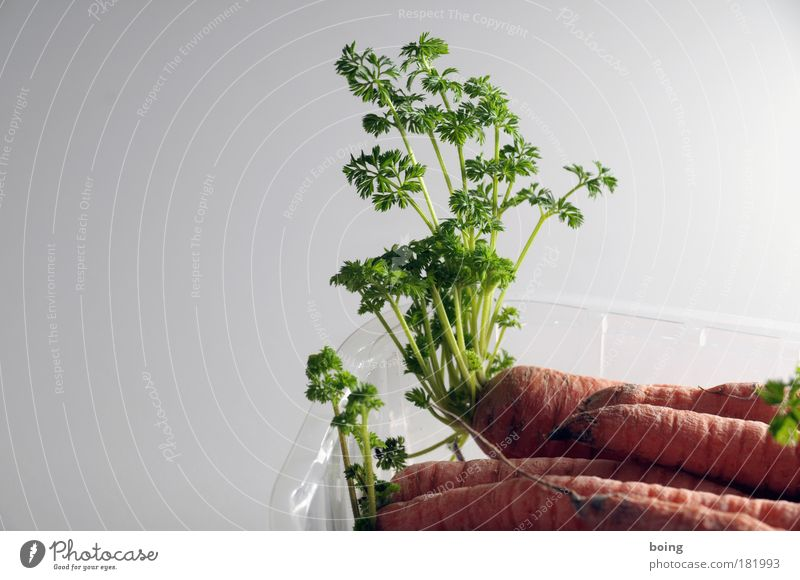 Plant Nutrition Life Flat (apartment) Food Growth Cooking & Baking Kitchen Living or residing Transience Gastronomy Joie de vivre (Vitality) Vegetable Brave Gardening Carrot