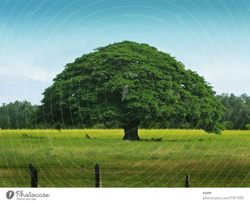 Sky Nature Blue Old Green Tree Plant Summer Calm Environment Landscape Yellow Meadow Life Time Large