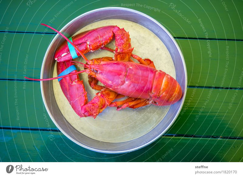 Food photo II Healthy Eating Dish Food photograph Nutrition salubriously Unhealthy Crustacean Lobster New England Maine Lobster Red