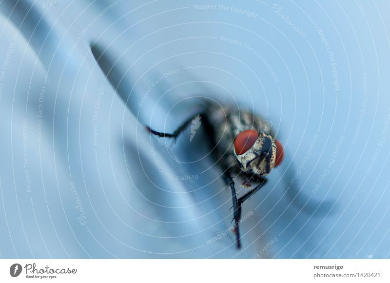 Closeup of a fly Animal Fly Sit Wing Insect Biology Pests Bug