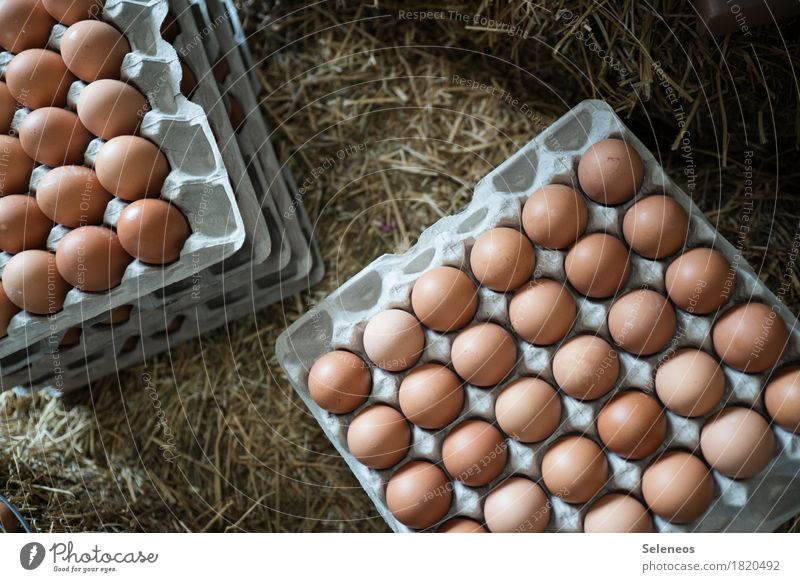 Eating Healthy Food Nutrition Fresh Easter Farm Organic produce Breakfast Egg Vegetarian diet Straw Eggshell Eggs cardboard Egg carton