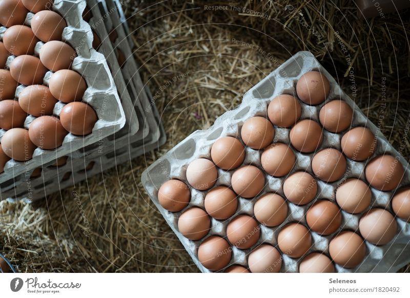 eggs Food Egg Eggshell Eggs cardboard Egg carton Nutrition Eating Breakfast Organic produce Vegetarian diet Fresh Healthy Straw Easter Farm Close-up Detail