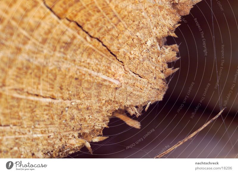 log of wood Wood Firewood Splinter Tree Macro (Extreme close-up) Close-up Wood grain Branch