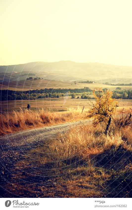 Nature Sun Plant Summer Vacation & Travel Yellow Sunset Movement Lanes & trails Warmth Landscape Bright Moody Field Gold Bushes