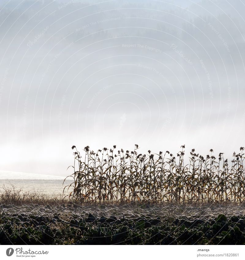 sunflowers Environment Nature Landscape Plant Elements Earth Sky Autumn Fog Flower Field Cold Moody Frost Colour photo Subdued colour Exterior shot Deserted