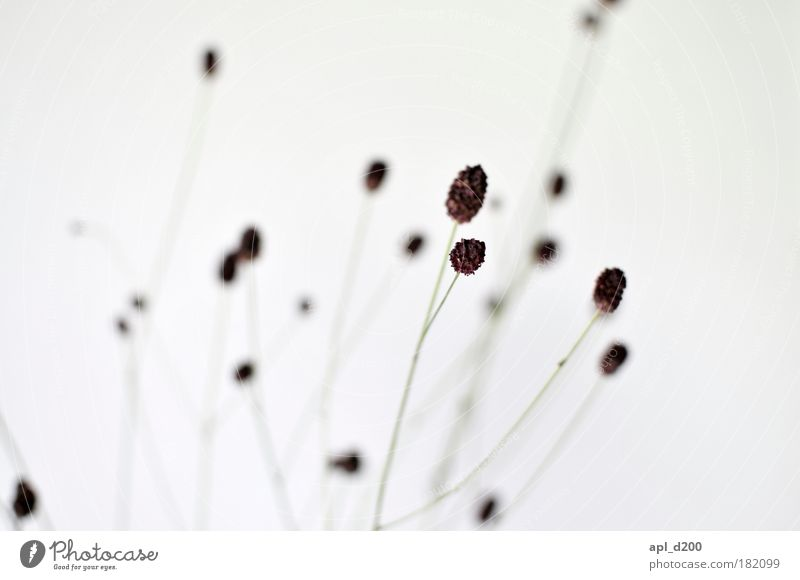 Nature White Green Plant Grass Contentment Brown Power Elegant Environment Detail Esthetic Stand Bushes Exceptional Pride