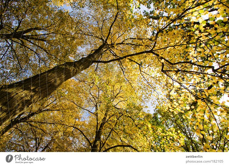 Golden Thing Tree Leaf Autumn Bright Sun Park Tree trunk Branch Twig golden autumn Autumn leaves Forest Deciduous forest Beautiful weather