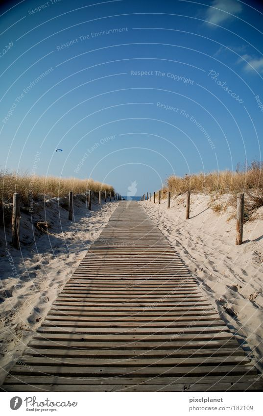 Nature Sun Beach Landscape Environment Ocean Happiness Bushes To enjoy Baltic Sea Beautiful weather Optimism Cloudless sky