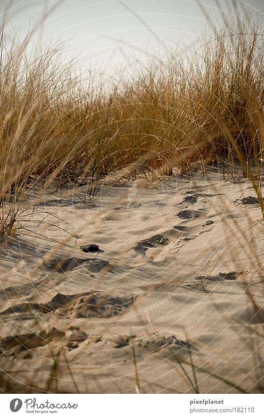 Nature Beach Sand Earth Bushes Baltic Sea Cuddly Disciplined