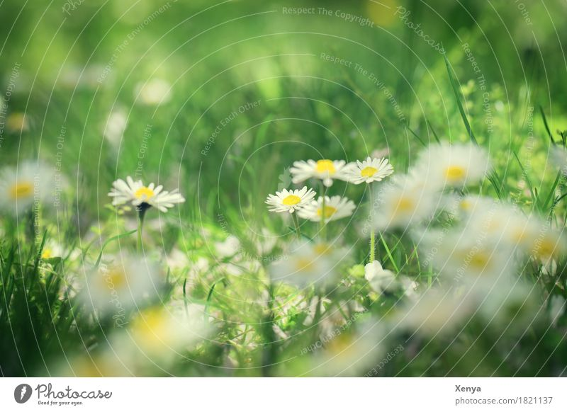 View through the flower Environment Nature Plant Beautiful weather Flower Blossom Daisy Garden Park Meadow Blossoming Happiness Fresh Brown Yellow White Happy