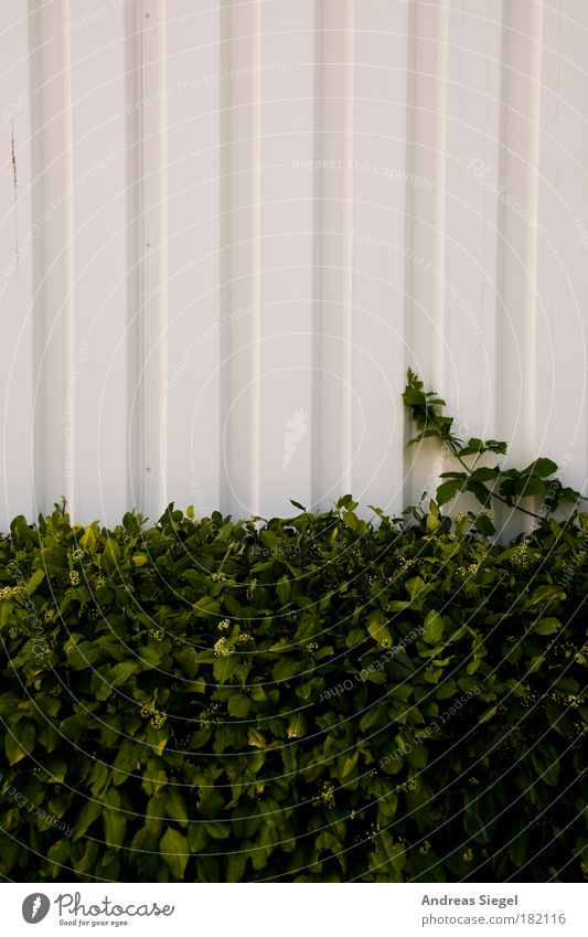 Nature White Green Plant Wall (building) Building Wall (barrier) Line Facade Design Bushes Simple Manmade structures Twig Hall Converse