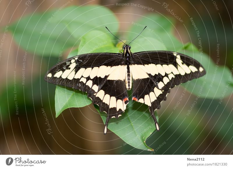Like a smile... Environment Nature Animal Butterfly 1 Soft Black White Insect Fragile Smiling Calm Colour photo Close-up Detail Macro (Extreme close-up)