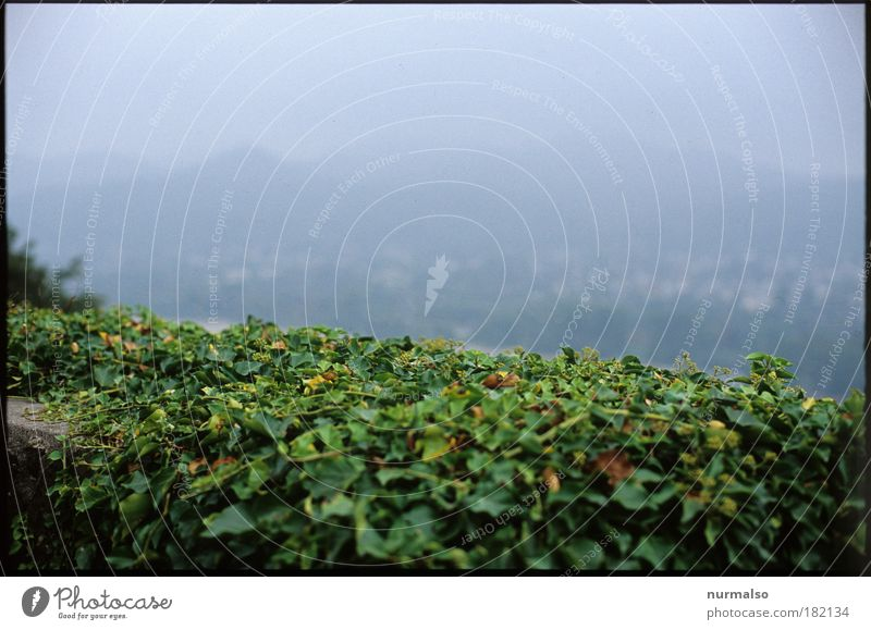 Nature Green Plant Vacation & Travel Calm Dark Autumn Wall (building) Movement Gray Dream Wall (barrier) Lanes & trails Landscape Fear Fog