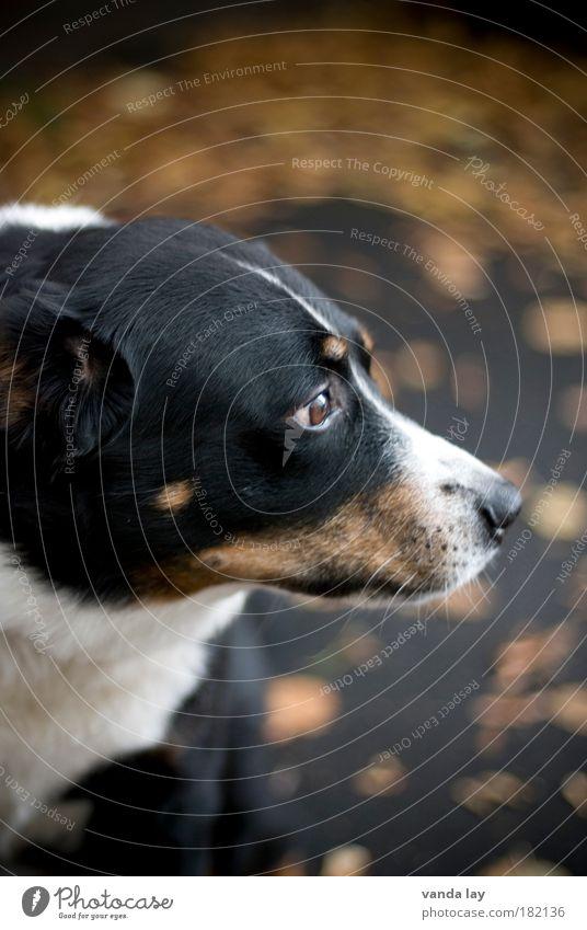 Tree Leaf Animal Black Autumn Dog Brown Nose Safety Threat Protection Brave Odor Pet Loyalty Watchdog