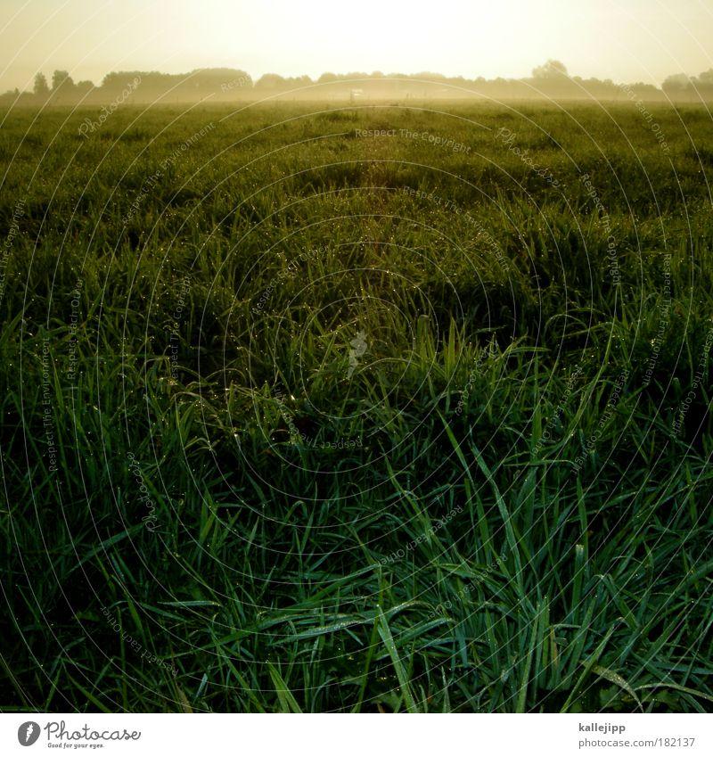 Nature Sky Tree Sun Plant Summer Autumn Meadow Grass Spring Rain Landscape Air Earth Field Fog