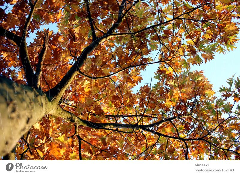 Sky Nature Tree Plant Sun Leaf Environment Autumn Park Gold Natural Warm-heartedness Hope Beautiful weather Belief Sunlight