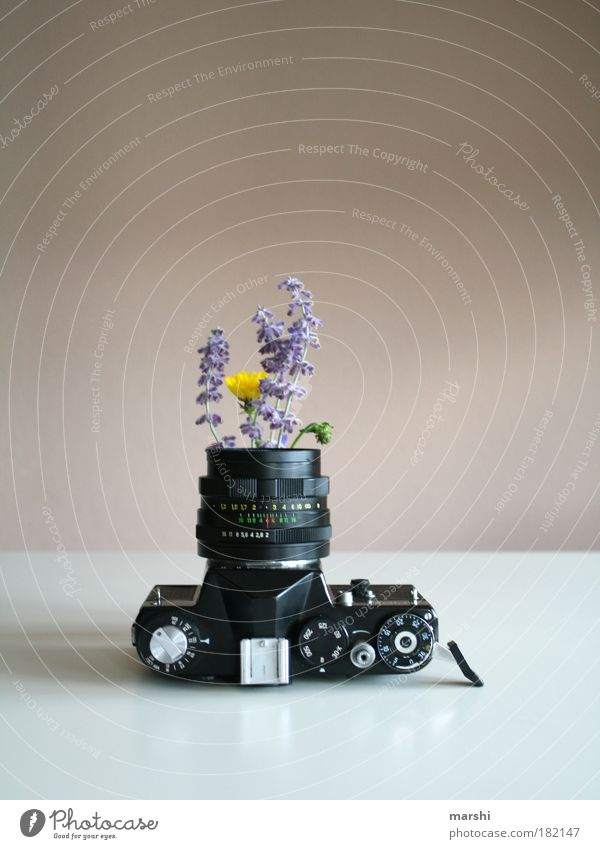 Nature Old White Flower Plant Black Yellow Style Photography Growth Leisure and hobbies Violet Decoration Exceptional Analog Blossoming