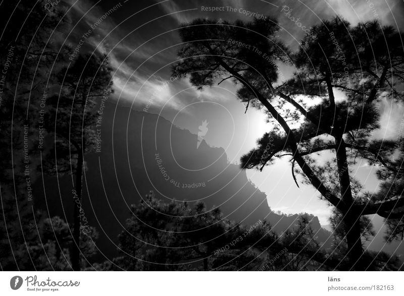 Nature Sky Plant Mountain Landscape Fog Environment Esthetic Tourism Forest Tree Shadow Time Black & white photo Canyon Pine
