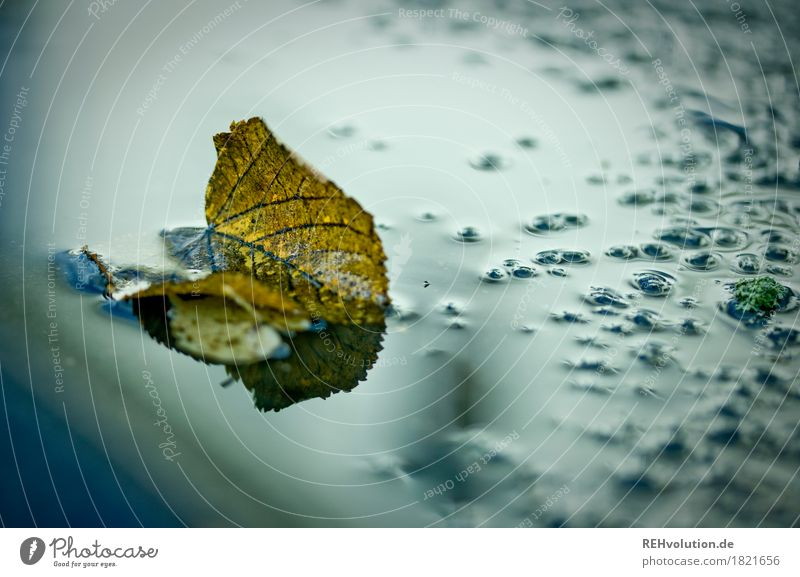 autumn Environment Nature Autumn Weather Bad weather Rain Leaf Water Wet Puddle Damp Colour photo Exterior shot Copy Space right Dawn Day Reflection Blur