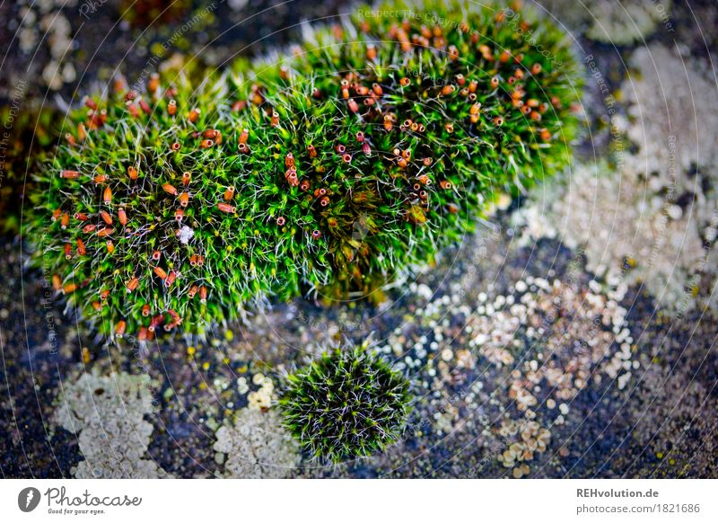moss Environment Nature Plant Moss Foliage plant Growth Green Background picture Colour photo Exterior shot Close-up Detail Macro (Extreme close-up)