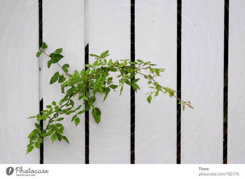 Nature Green Plant Calm Autumn Garden Growth Stripe Curiosity Discover Fence Gap Column Striped Patient Resolve