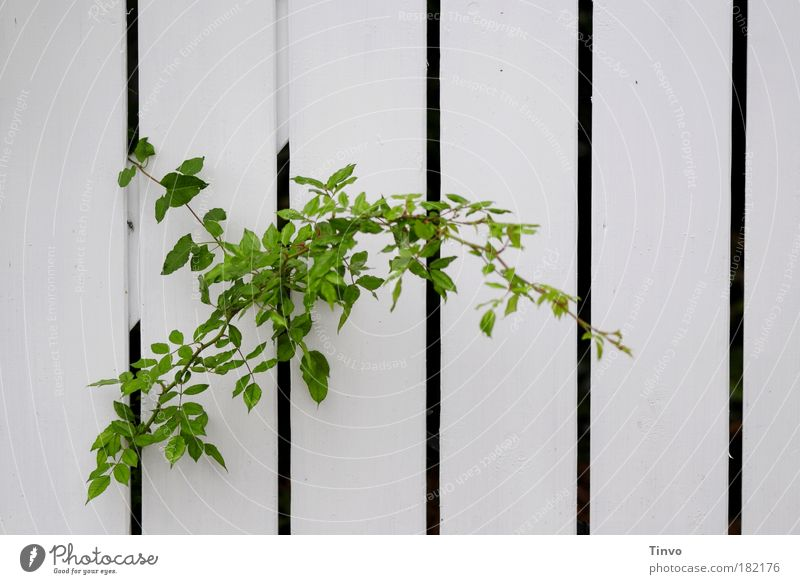 Nature Green Plant Calm Autumn Garden Growth Stripe Curiosity Discover Fence Gap Column Striped Patient Resolve