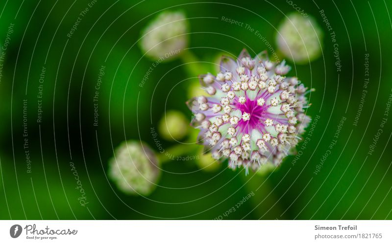 abstract flowers Nature Spring Plant Flower Grass Blossom allium Leek Garden Park Field Blossoming Fragrance Faded Fresh Healthy Round Green Violet White
