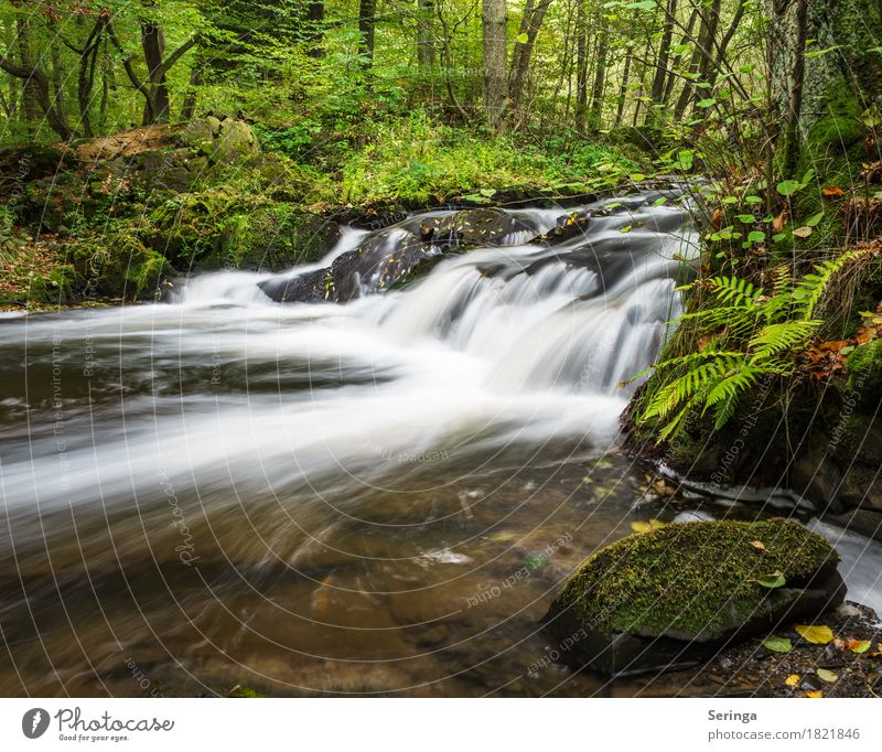 Nature Vacation & Travel Plant Summer Water Sun Landscape Animal Forest Environment Spring Autumn Freedom Lake Tourism Leisure and hobbies