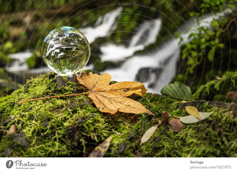 Through the glass Nature Landscape Plant Animal Water Grass Moss River bank Waterfall Beautiful Glass ball Colour photo Subdued colour Multicoloured