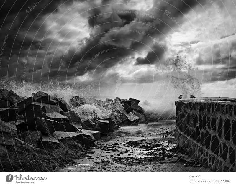 resistance Environment Nature Landscape Elements Clouds Storm clouds Autumn Bad weather Wind Gale Sassnitz Wall (barrier) Wall (building) Stone Exceptional Dark