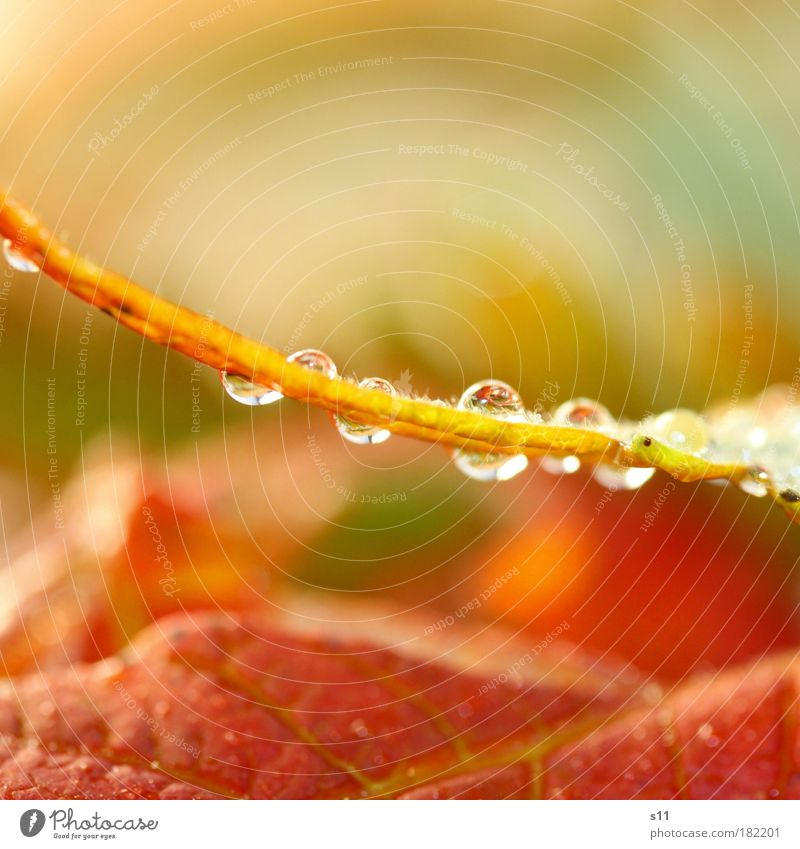 Nature Beautiful Red Leaf Environment Autumn Happy Small Bright Park Moody Power Gold Glittering Natural Elegant