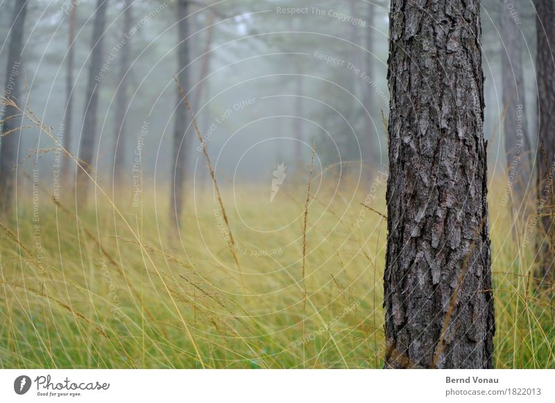 trunk Environment Nature Forest Emotions Moody Autumn Fog Grass Gray Rough Tree bark Pine Fat Force Weather Bad weather Colour photo Exterior shot Deserted