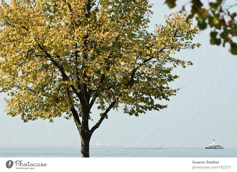 Nature Water Tree Autumn Lake Watercraft Waves Coast Island Bay To enjoy Lakeside Navigation Sailboat Ferry Sailing ship