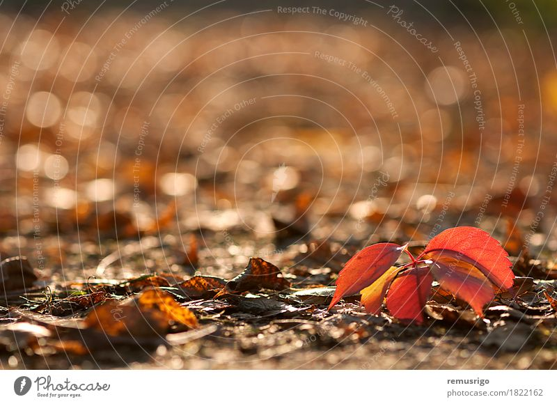 Red leaves on the ground Autumn Leaf Park Brown Yellow Colour background eco November Seasons Consistency Colour photo Exterior shot Deserted Morning
