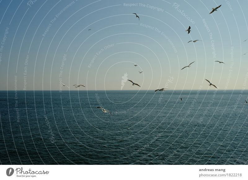 Vacation & Travel Water Ocean Animal Far-off places Freedom Flying Bird Together Horizon Weather Waves Trip Speed Adventure