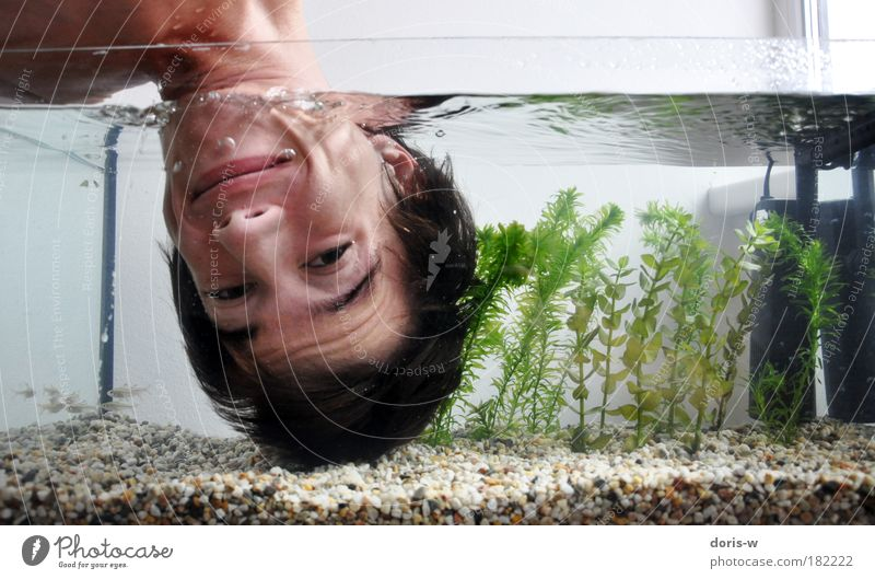 Submerged Dive Young man Youth (Young adults) Man Adults Head Face Cold Air bubble Aquarium Fish Stone Funny Laughter Smiling Joy Surface of water Aquatic plant