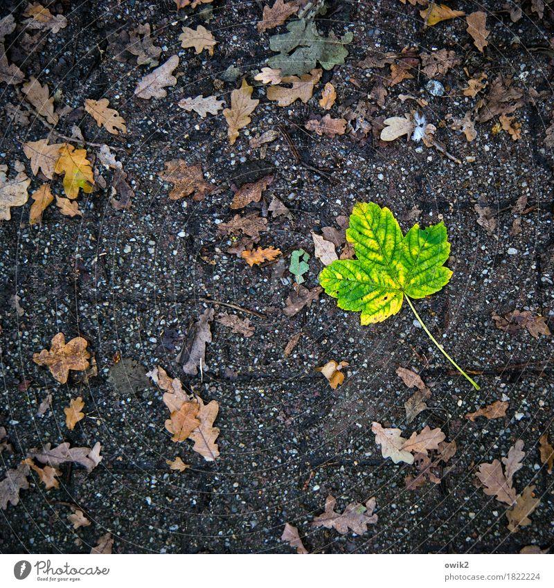 eccentric Environment Nature Plant Autumn Leaf Under Yellow Green Orange Sadness Concern Grief Loneliness Idyll Pure Pain Decline Transience Change Sidewalk