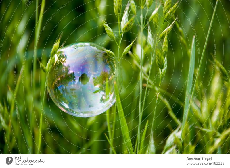 PC Colour photo Exterior shot Close-up Detail Deserted Day Reflection Lifestyle Style Joy Leisure and hobbies Environment Nature Earth Grass Meadow Sign