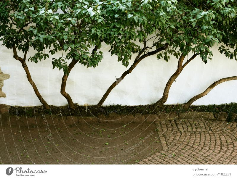 Space saving Colour photo Exterior shot Detail Deserted Copy Space bottom Day Light Central perspective Nature Tree Garden Wall (barrier) Wall (building)