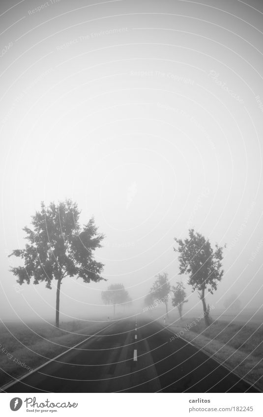 Journey into nothingness Black & white photo Copy Space top Neutral Background Dawn Shallow depth of field Wide angle Landscape Autumn Fog Tree Deserted Street