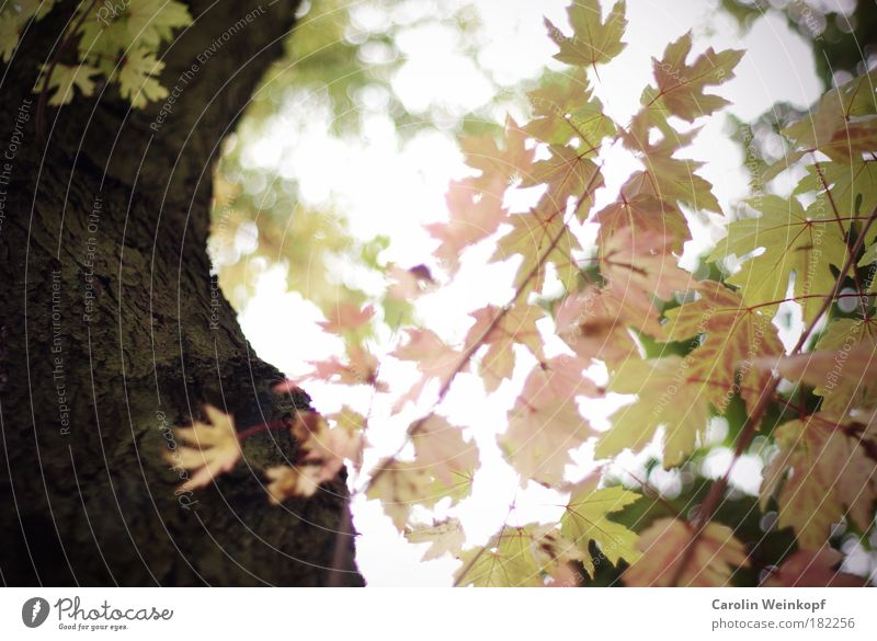 Sky Nature Old Green Tree Leaf Environment Cold Autumn Sadness Park Contentment Wind Gold Pink Esthetic