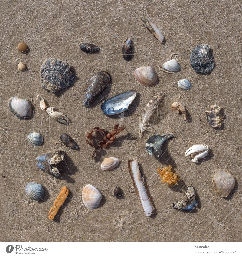 parts of the whole Nature Elements Sand Beach North Sea Ornament Esthetic Contentment Design Flotsam and jetsam Super Still Life Mussel Shellfish Feather Wood