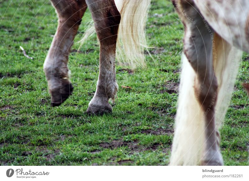 Green Animal Meadow Legs Brown Going Walking Horse Pelt Pasture Joie de vivre (Vitality) Boredom Stomach Tails Farm animal Ride