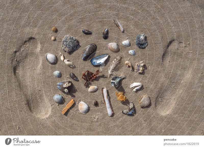 anticapitalism | shell currency Feet Nature Elements Sand Summer Coast North Sea Paying Looking Collection Mussel Snail shell Shellfish Footprint