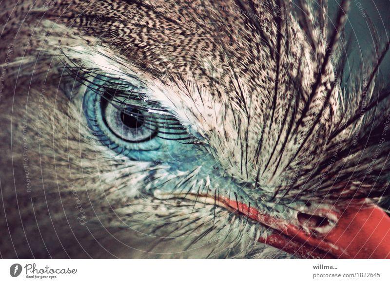 Beautiful Eyes Bird Feather Exotic Eyelash Plumed