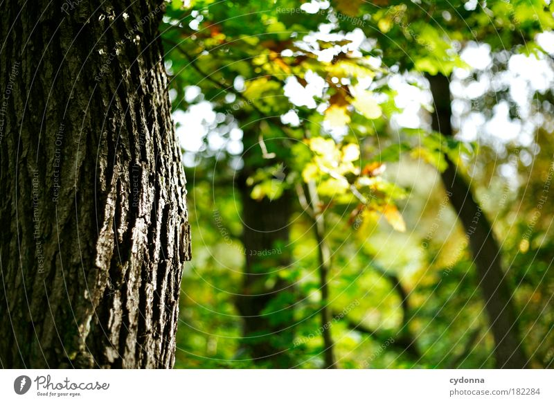 Nature Beautiful Tree Leaf Calm Forest Relaxation Autumn Life Environment Dream Time Contentment Power Uniqueness Transience