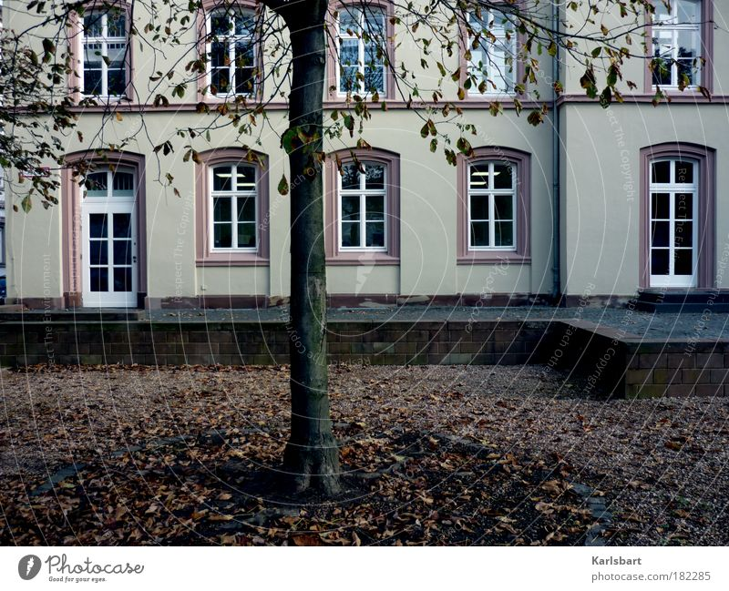 Tree Leaf House (Residential Structure) Autumn Window Wall (building) Architecture Garden Sadness Wall (barrier) Park Art Facade Academic studies