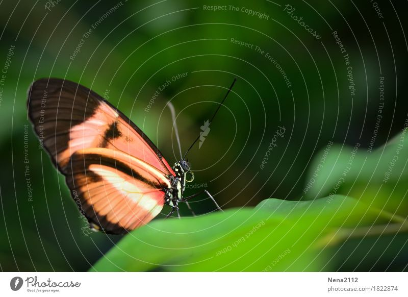 When is it spring again? Environment Nature Plant Animal Spring Summer Climate Weather Beautiful weather Leaf Butterfly 1 Green Orange Loneliness Individual